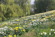 Pleasant Valley Daffodils, Geraldine, New Zealand