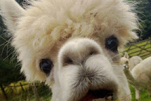 Alpacaly Ever After, Portinscale, United Kingdom