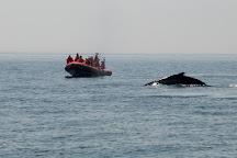 Brier Island Whale and Seabird Cruises, Westport, Canada