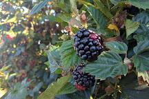 Marburger Orchard, Fredericksburg, United States
