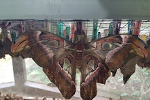 Bali Butterfly Park, Tabanan, Indonesia