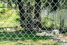 Seacrest Wolf Preserve, Chipley, United States