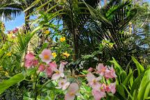 Princeville Botanical Gardens, Princeville, United States