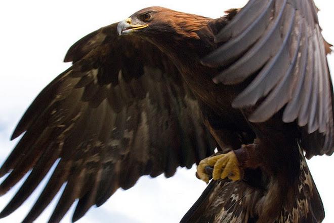 visit possumwood acres wildlife sanctuary on your trip to hubert