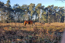 Hindhead Commons and the Devil's Punch Bowl