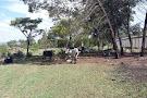 Hedianga Farm