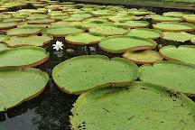 SSR Botanic Garden, Pamplemousses, Mauritius