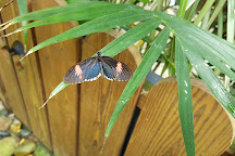Key West Butterfly & Nature Conservatory, Key West, United States