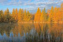 Chippewa National Forest, Cass Lake, United States