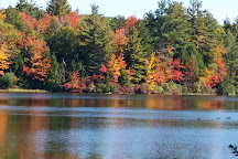 D.A.R. State Forest, Goshen, United States