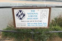 National Lobster Hatchery, Padstow, United Kingdom