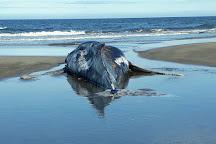 Punta Mogotes, Mar del Plata, Argentina