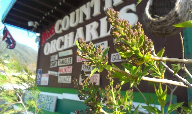 Moms Country Orchards