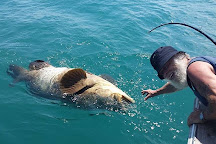Shark Fishing Cocoa Beach, Port Canaveral, United States