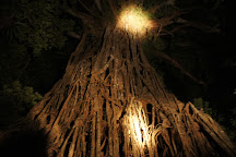 Cathedral Fig Tree, Yungaburra, Australia