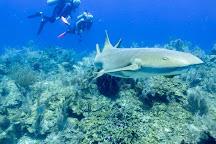 Seahorse Dive Shop, Placencia, Belize
