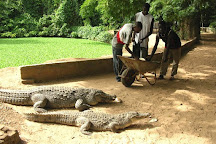 Katchikally Crocodile Pool, Bakau, Gambia