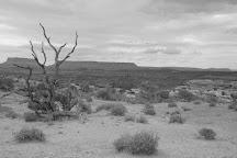 The Needles, Canyonlands National Park, United States