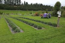 Wanaka Lavender Farm, Wanaka, New Zealand