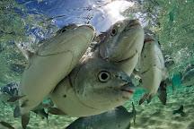 Pro Dive Lord Howe Island, Lord Howe Island, Australia