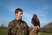 Cumberland Bird Of Prey Centre, Thurstonfield, United Kingdom