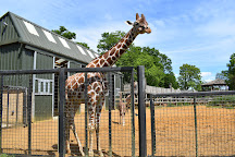 ZSL Whipsnade Zoo, Dunstable, United Kingdom