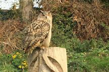 Walworth Birds of Prey, Walworth, United Kingdom