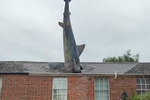Headington Shark, Oxford, United Kingdom