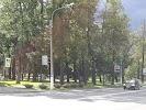 Голицынский сад на фото Петергофа