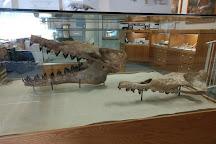 Aurora Fossil Museum, Aurora, United States