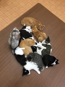 保護猫カフェ VELCAT 馬車道店