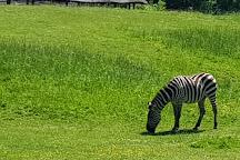 Zoo Opole, Opole, Poland