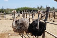 Aruba Ostrich Farm, Oranjestad, Aruba