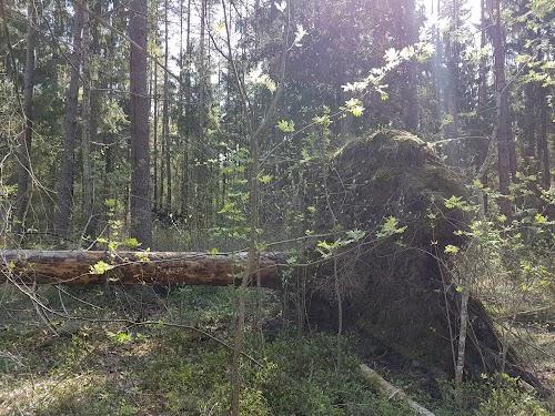 Kilingi-Nõmme metsarada