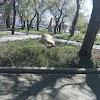 Пам'ятник Слава Труду на фото Вознесенска