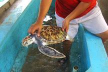 Sea Turtle Center, Mazunte, Mexico
