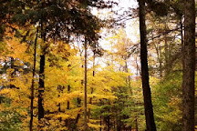 Tolland State Forest, Otis, United States