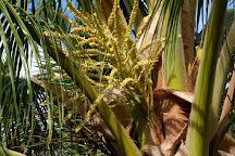 Punakea Palms, Lahaina, United States