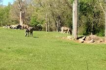 North Carolina Zoo, Asheboro, United States