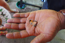 Zanzibar Butterfly Centre, Zanzibar Island, Tanzania
