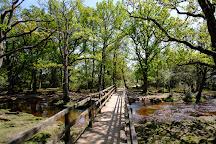 New Forest National Park, Lyndhurst, United Kingdom
