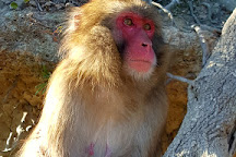 Awajishima Monkey Center, Sumoto, Japan