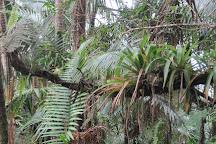 Monte Guilarte State Forest, Adjuntas, Puerto Rico
