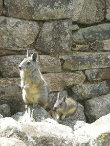 www.privatetoursperu.com. David Expeditions Peru 7