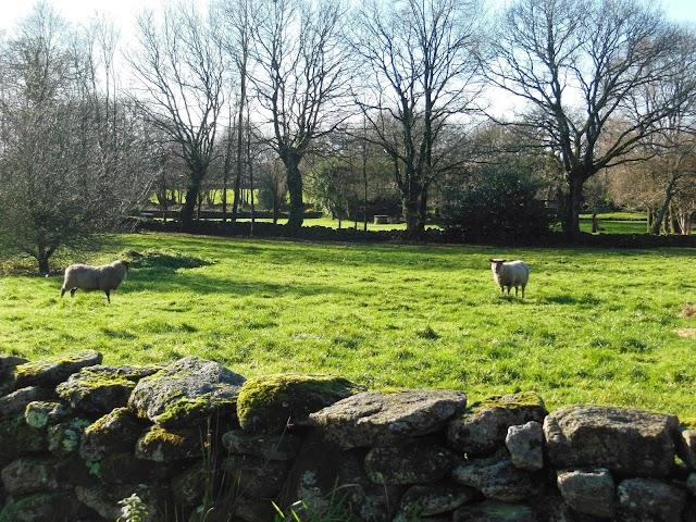 Penquelen Huella Farm