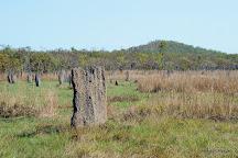 Magnetic Termite Mounds, Darwin, Australia