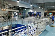 Dubai Aquarium & Underwater Zoo, Dubai, United Arab Emirates