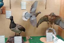 Werner Wildlife Museum, Casper, United States