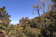 Bosque De Palma De Cera La Samaria, Salamina, Colombia