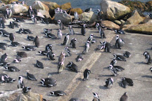 Stony Point Penguin Colony, Betty's Bay, South Africa